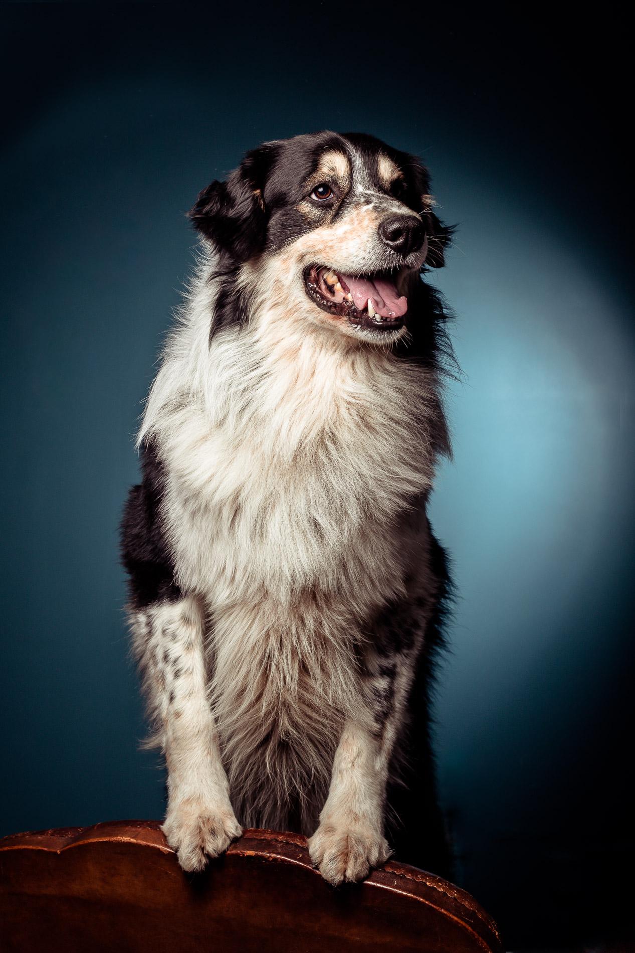 portrait-chien-carcassonne-10