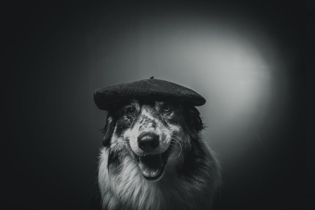 portrait-chien-carcassonne-12