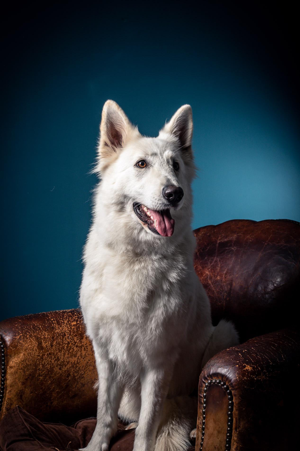 portrait-chien-carcassonne-4