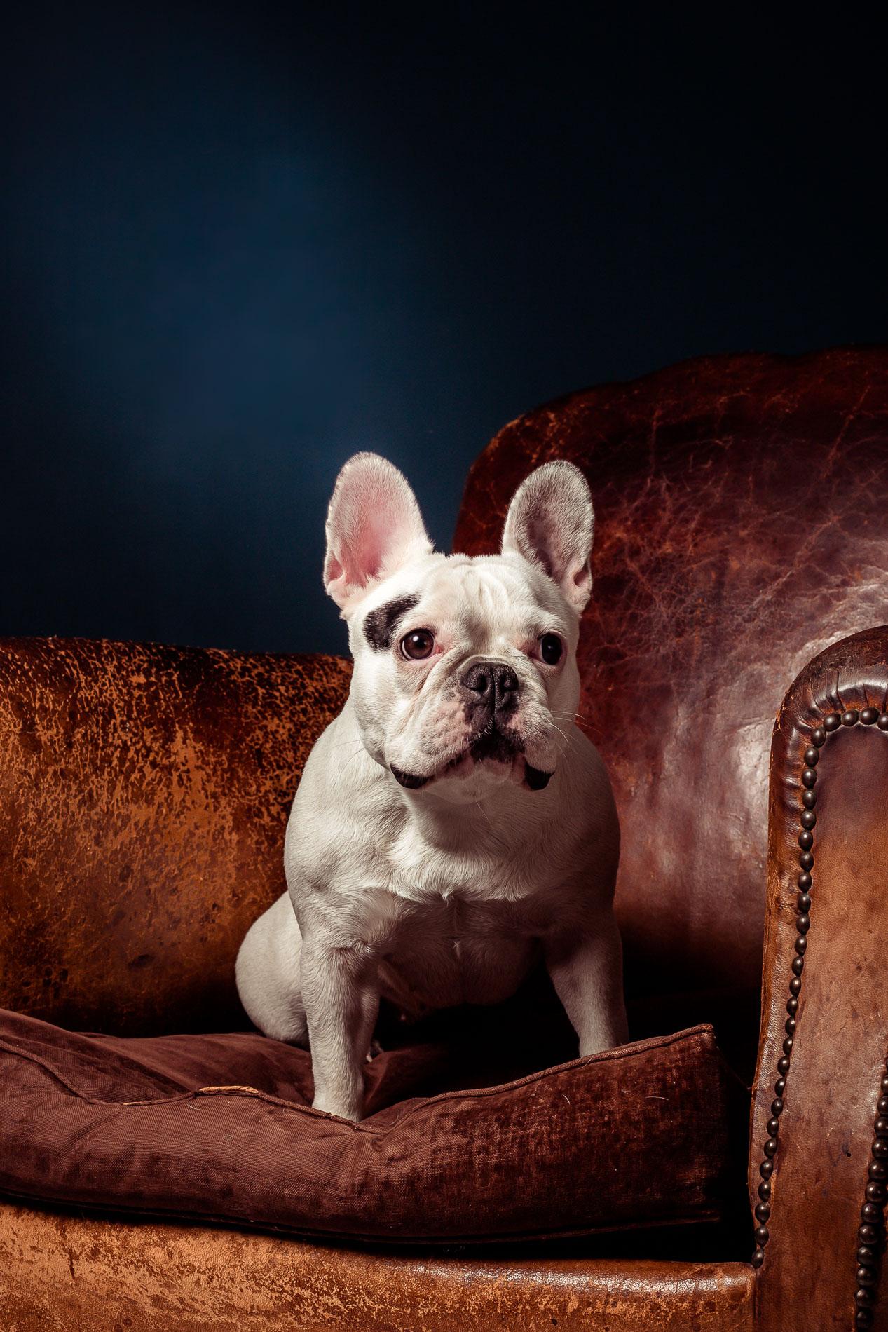 portrait-chien-carcassonne-5