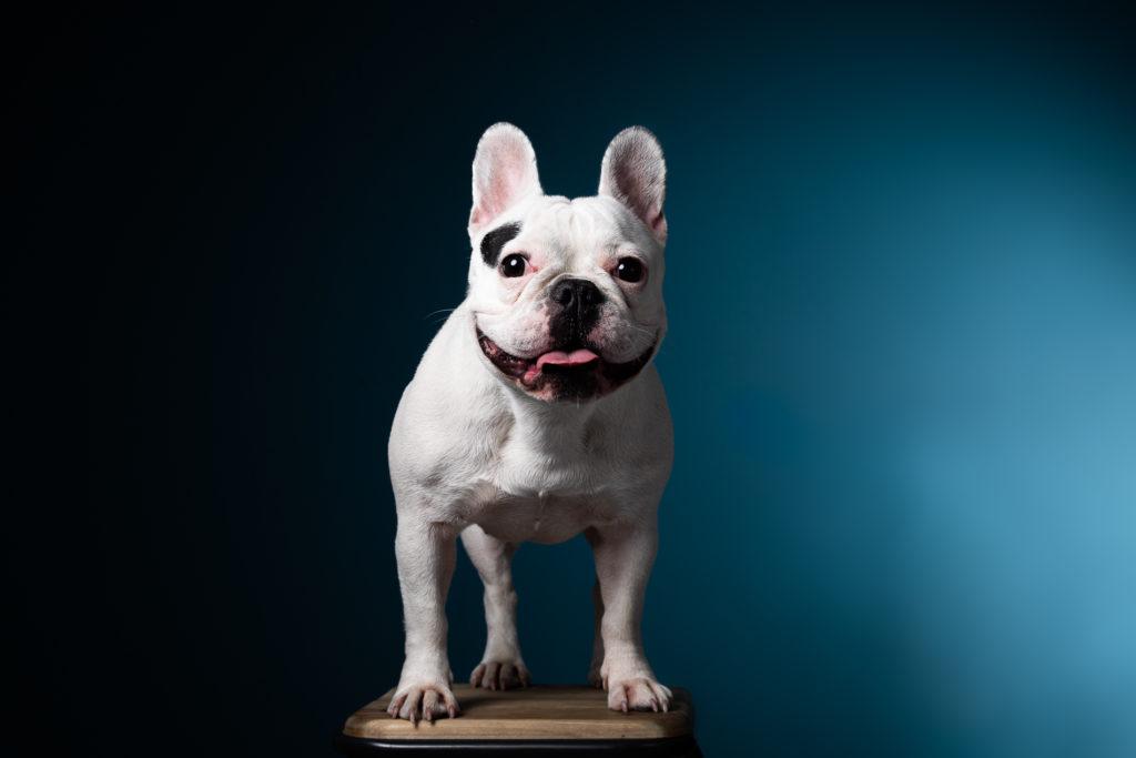 portrait-chien-carcassonne-6