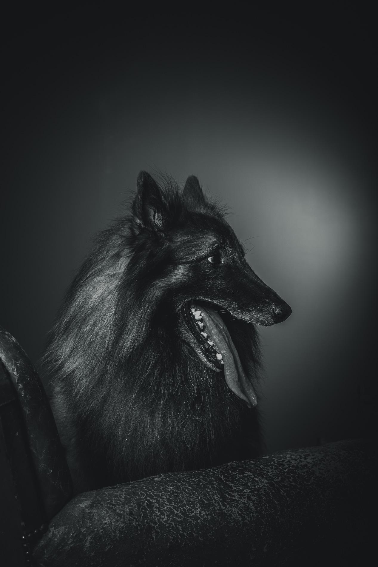 portrait-chien-carcassonne-8