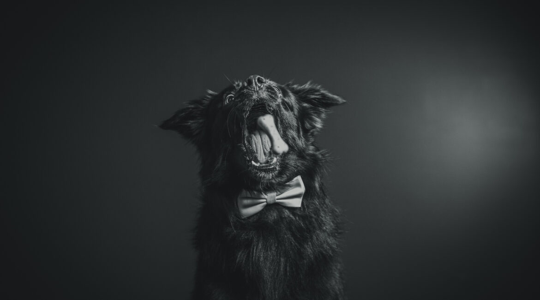 Et si votre animal se faisait lui aussi tirer le portrait ?